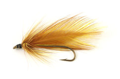 Brown fly fishing fly Royalty Free Stock Image