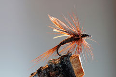 Brown fly fishing lure. Macro shot of a brown dry fly fishing lure Stock Photography