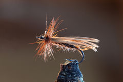 Brown fly fishing lure. Macro shot of a dry fly fishing lure with brown hackle and a brown body Stock Images