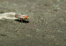 Brown fly on wood back ground Stock Image