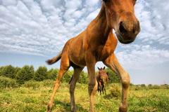 Brown foal against skies Stock Photo