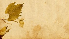 Brown foliage in autumn. Foliage in autumn on a brown paper Royalty Free Stock Images