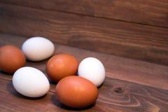 Brown fresco y huevos blancos Imagen de archivo libre de regalías