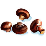 Brown fresh champignons isolated vector illustration