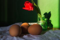 Brown fresh eggs with red tulip in sunlight . Close up stock photos