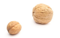 Brown, fresh, small and big walnuts on white background Stock Image
