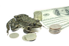 Brown frog with coins and banknotes Stock Photo