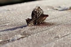 Brown Frosty Leaf Standing simple sur le Tableau en bois Photos stock