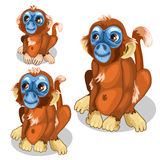 Brown funny monkey with blue face. Vector  Stock Photography