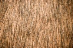 Brown fur Stock Photos
