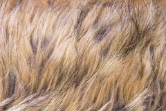 Brown fur Stock Photo