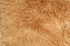 Brown fur background texture Royalty Free Stock Image