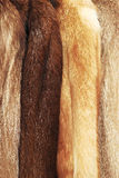 Brown fur coats Royalty Free Stock Image