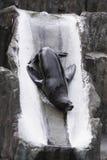 Brown fur seal stock images