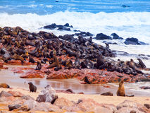 Brown fur seal, Arctocephalus pusillus, colony at Cape Cross in Namibia, Africa Stock Image