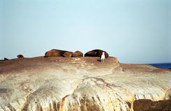Brown fur seals, Duiker Island, South African Republic Royalty Free Stock Photography