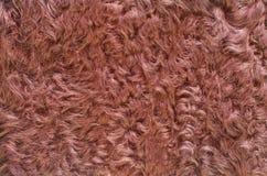 Brown fur Royalty Free Stock Photos