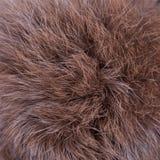 Brown fur texture Stock Photo