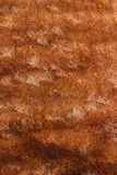 Brown fur texture Stock Images