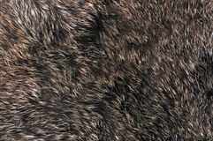 Brown fur texture. Dark brown and white details fur texture Royalty Free Stock Photo