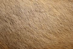 Brown fur texture Stock Photography