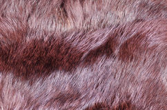 Brown furry fabric Stock Photography