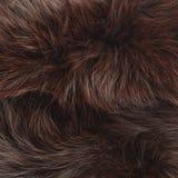 Brown futerka tekstura Zdjęcie Stock