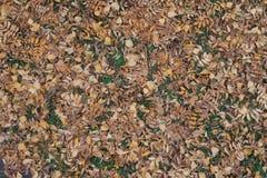 Brown gefallene Blätter der Eberesche und der Birke Lizenzfreie Stockbilder