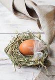 Brown ägg i ett rede Royaltyfria Foton