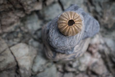 Brown gholden dennego czesaka brogującego na skałach Obrazy Royalty Free