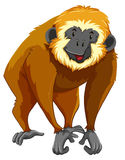 Brown gibbon with happy face Royalty Free Stock Photo