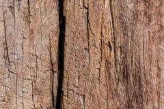 Brown gnicia drewno obrazy royalty free
