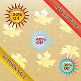 Brown and gold autumn sale over white background. Royalty Free Stock Image