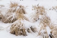 Snowy dry grass in winter stock images