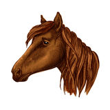 Brown graceful horse with sad eyes portrait Stock Photography