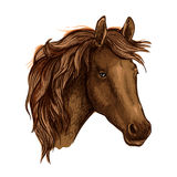 Brown graceful sad horse portrait Royalty Free Stock Photography