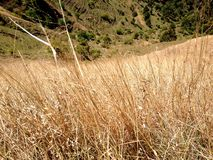 Brown grass Stock Image