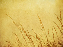 Brown Grass Background. Wild grass on a brown paper texture Royalty Free Stock Photo