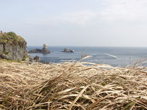 Brown grass with cliff and blue ocean. Background Stock Photo