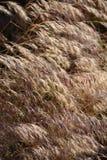 Brown grass Stock Photos
