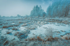 Brown Grass Covered by Snow Photo Royalty Free Stock Image