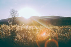 Brown Grass Field during Sunrise Stock Image