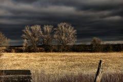 Brown Grass Field Under Black Sky during Nighttime Stock Photos
