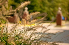 Brown grass. With green tree  and brown brick in the background Stock Photo