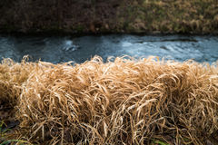 Brown grass growing next to a stream. The brown grass is in stark contrast with the stream  in the background Royalty Free Stock Photos