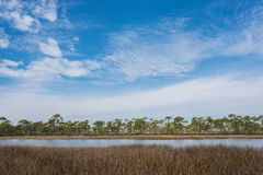 Brown Grass in Marsh under Blue Cloudy Sky Stock Image