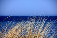 Brown Grass Near Calm Water Royalty Free Stock Images
