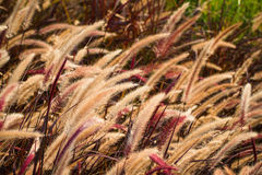 Brown grass beside the road at dawn. Stock Photos