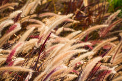 Brown grass beside the road at dawn. Stock Photography