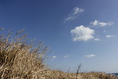 Brown grass scene dry in winter on sky Royalty Free Stock Photo